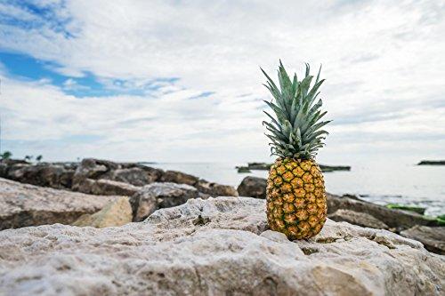 Einsame Ananas am Fels ca. 60 x 42 cm Plakat Druck hochwertiges Fotopapier