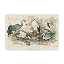 Trademark Fine Art Herons Egrets and Cranes by J. Stewart, 30x47-Inch