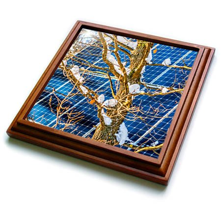 3dRose Alexis Photography - Objects - Young snow covered oak tree and a solar power panel in winter park - 8x8 Trivet with 6x6 ceramic tile (trv_280889_1) -