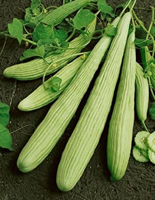 Armenian Yard Long Cucumber Seeds - Cucumis Sativus - 2 Grams - Approx 50 Gardening Seeds - Vegetable Garden Seed