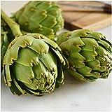 Seed Needs, Non-GMO Mary Washington Asparagus