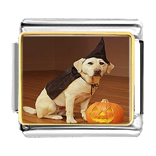 GiftJewelryShop Gold Plated dog Halloween costume pumpkin Bracelet Link Photo Italian Charms (Pugster Pumpkin Halloween)
