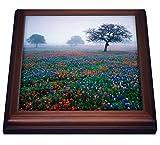 3dRose Danita Delimont - Flowers - Texas paintbrush, bluebonnets, Hill Country, Texas USA - US44 AJE0055 - Adam Jones - 8x8 Trivet with 6x6 ceramic tile (trv_146605_1)