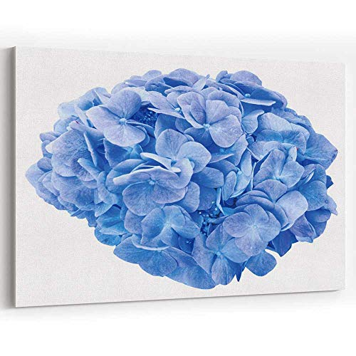 Mop Head Hydrangea - Mop Head Hydrangea Flower Isolated Canvas Art Wall Dcor Painting Wall Art Picture Print on Canvas