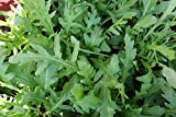Gaea's Blessing Seeds - Organic Arugula Seeds 2000+ Non-GMO Heirloom Rocket 90% Germination Rate, Net Wt. 3.8g