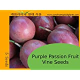 Tropical Exotic Passion Fruit Seeds - Purple Passiflora edulis - 10 Seeds
