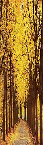 Linden Window Treatments - Landscape 3D Decorative Film Privacy Window Film No Glue,Frosted Film Decorative,Botanical Garden Autumn Leaves in The Fall Linden Alley in Kiev Ukraine Image,for Home&Office,23.6x59Inch Yellow Brown