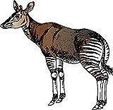 Okapi Animal Home Decal Vinyl Sticker 12'' X 12''