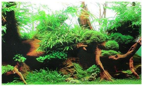 Rückwandfolie 80cm x 45 cm Rückwandposter für Aquarien