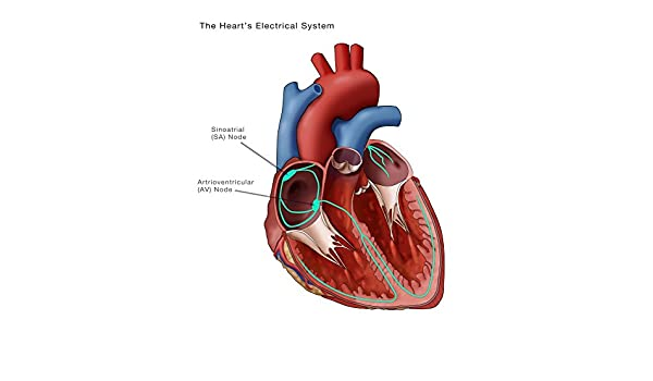 Amazon hearts electrical system poster print by monica amazon hearts electrical system poster print by monica schroederscience source 18 x 24 posters prints ccuart Images