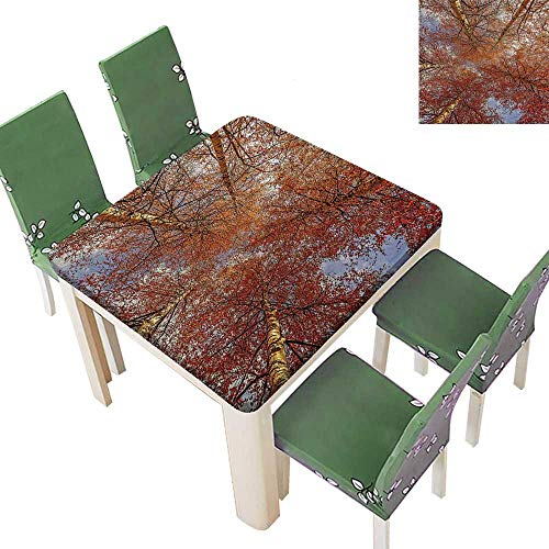 (Printsonne Polyester Table Cloth Fall Birch TRE Rural Oak Woodl Peace Envir Ment Park Foliage Pictu Table 50 x 50 Inch (Elastic Edge))