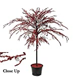 Northlight Red Crystallized Glitter Potted Holiday Tree with Mirrors and Beads, 46''