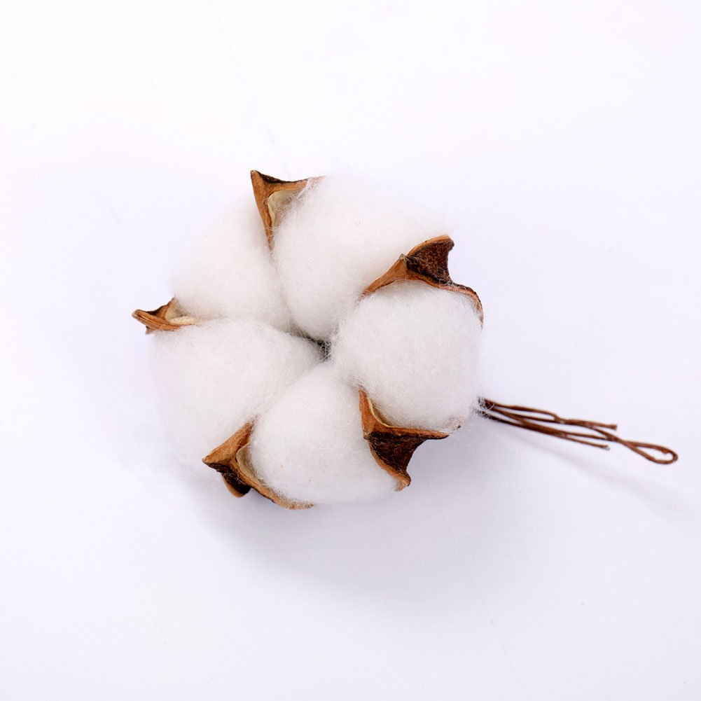 Balls Darget Cotton Balls Decor Made of Real Natural Cotton Great for Crafting Farmhouse Style 20 Pieces for Wreath Decor Cotton Bolls