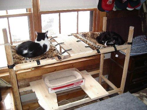 Six Cat, My Pet Supplies