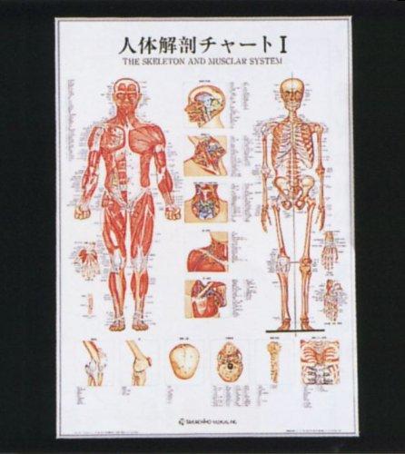 新発売の 人体解剖チャートⅠ(パネル入) B009RKGQSY B009RKGQSY, 海外並行輸入正規品:459cb5df --- a0267596.xsph.ru