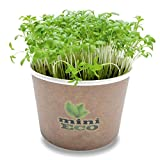MiniEco Organic Microgreens Growing Kit for Garden Cress Seeds. Your Healthy Life Can Start Now!