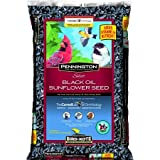 buy Pennington Select Black Oil Sunflower Seed Wild Bird Feed, 40 lbs now, new 2018-2017 bestseller, review and Photo, best price