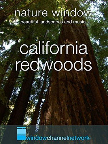 California Redwoods, Nature Window