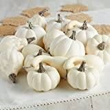 Factory Direct Craft 16 Piece Package of Assorted Harvest Off White Artificial Gourds and Pumpkins For Home Decor, Harvest Embellishing and Displaying