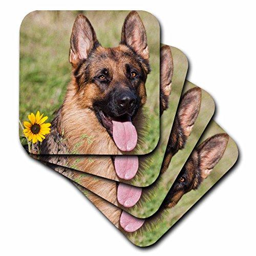- 3dRose Portrait of German Shepherd Dog - Us32 Zmu0080 - Zandria Muench Beraldo - Ceramic Tile Coasters, Set of 4 (CST_145330_3)