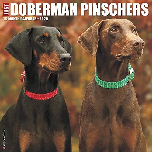 Dobermann Trainers4me