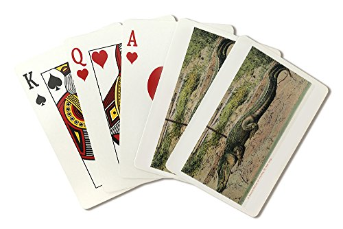 Florida - View of 19 foot long Alligator (Playing Card Deck - 52 Card Poker Size with Jokers)
