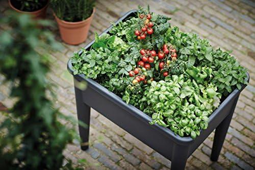Elho Green Basics Grow Table XXL Crecimiento, Negro Intenso ...