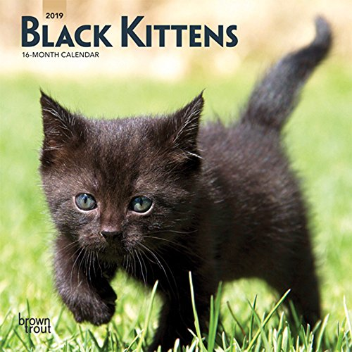 Black Kittens 2019 7 x 7 Inch Monthly Mini Wall Calendar, Animals Cats Kittens (Multilingual Edition)