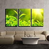 wall26 - 3 Piece Canvas Wall Art - Tea Bud and Leaves. Tea Plantations, Kerala, India - Modern Home Decor Stretched and Framed Ready to Hang - 24''x36''x3 Panels