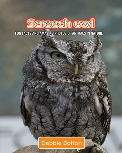 Farm Owl Screech - Screech owl: Fun Facts and Amazing Photos of Animals in Nature