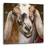3dRose Nubian Dairy Goat Doe White Stripe Caprine Sq - Wall Clock, 10 by 10-Inch (dpp_156065_1)