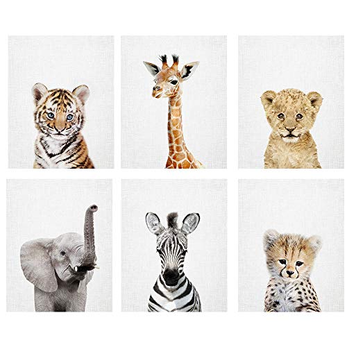 Baby Safari Animal Prints 8x10 tx  Set of 6 Adorable Furry Baby Animal Portraits  Tiger Cub Giraffe Elephant Zebra Cheetah Lion Cub  Nursery Animal Wall Art Pale Gray Background Unframed