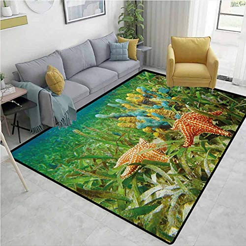 Starfish Modern Area Rug Underwater Marine Life with Colorful Sponges and Starfish Surrounded by Seagrass Environmental Protection W59 x L82 Multicolor