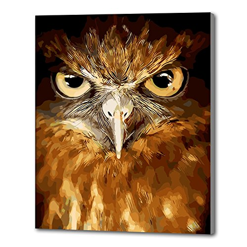 Diy Oil Painting, paint By Number Kits-The Owl 16×20 inches