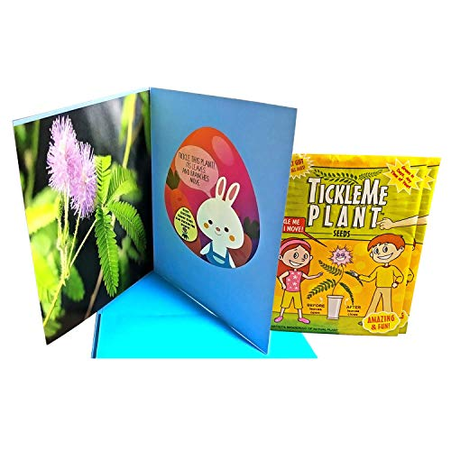 (Easter Greeting Card with 2 packets of TickleMe Plant seeds! Celebrate Easter a little different this year, Grow it, Tickle It, watch the leaves Fold up. It will make the recipient SMILE! )