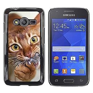 Be Good Phone Accessory // Dura Cáscara cubierta Protectora Caso Carcasa Funda de Protección para Samsung Galaxy Ace 4 G313 SM-G313F // Orange American Shorthair Chausie Cat