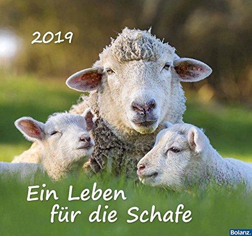 Ein Leben für die Schafe 2019