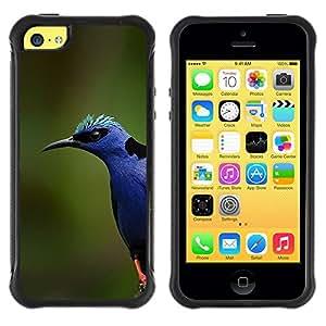 LASTONE PHONE CASE / Suave Silicona Caso Carcasa de Caucho Funda para Apple Iphone 5C / blue bird colorful nature spring summer