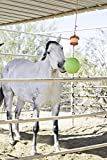 Horsemen's Pride Combo Horse Stall Toy: Apple