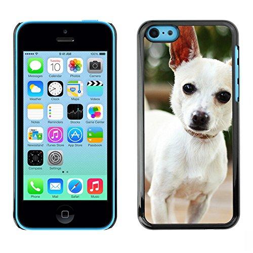 Omega Case PC Polycarbonate Cas Coque Drapeau - Apple iPhone 5C ( Cute Chihuauah Dog )
