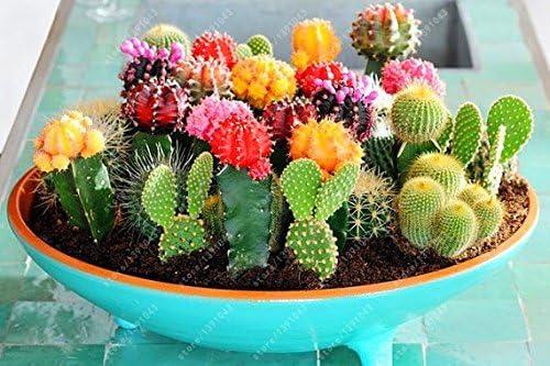 SUBTLE 100粒 サボテンの種 混合ミニサボテン 鉢植え ガーデンの装飾 植物の種 花 高い発芽率 簡単に育てる 観葉植物 開花 園芸