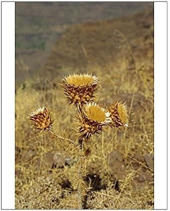 Impresión fotográfica de plantas en La zona entre alajéro e Erquito, La Gomera, Islas Canarias, España: Amazon.es: Hogar