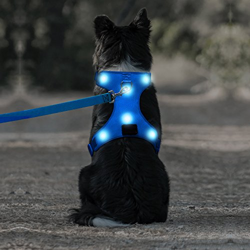 Great harness