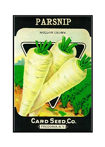 Parsnip Seed Packet (24x36 Framed Gallery Wrapped Stretched Canvas)