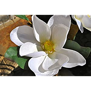 Southern magnolia stems~magnolia bloom stems~magnolia decor~faux magnolia blooms~farmhouse decor~rustic decor~magnolia bouquet 4