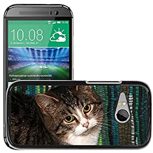 Hot Style Cell Phone PC Hard Case Cover // M00111469 Cat Kitten Pet Animals Cats Fur // HTC One Mini 2 / M8 MINI / (Not Fits M8)
