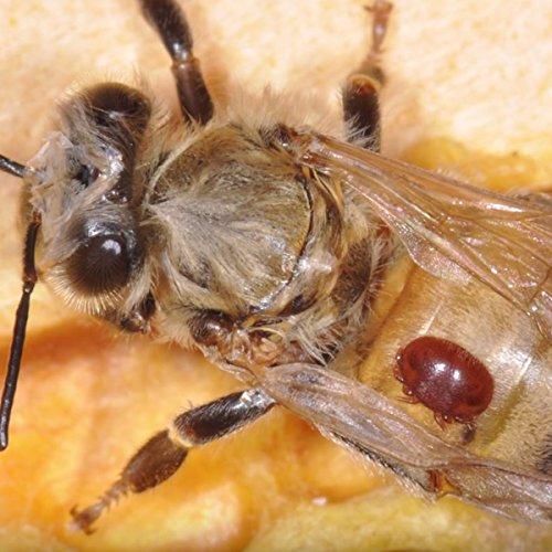 reCAP Mason Jars DIY Kit for Beekeeping, Regular Mouth - BPA-Free, American  Made Ball Mason Jar Lids Kit for Beekeeping and Detecting Mites, Spill
