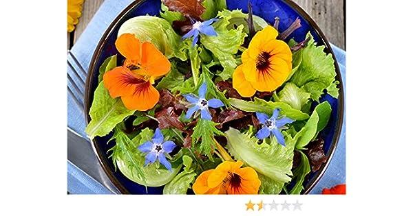 Hierbas comestibles y flores mezcla semillas -: Amazon.es: Jardín