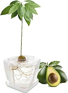 AvoSeedo Grow Your Own Avocado - Unusual Gardening Gifts for Women | Avocado Tree Kit with Plant Pot | Outdoor Indoor Plant | Home Decorations Accessories | Allotment Gifts for Her