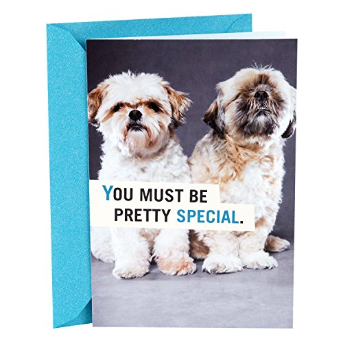 Hallmark Shoebox Funny Birthday Card (Shih Tzu Puppies) (Bone Shih Tzu)
